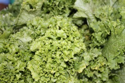05_09 lettuce - close - reduced